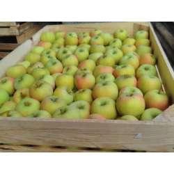Pomme Belchard Chantecler
