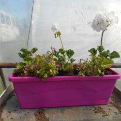 jardinière violette