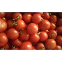 tomate Matina bio
