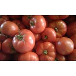Tomate rouge  bio